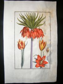 Daniel Rabel 1771 Folio Hand Col Botanical. Crown Imperial Lily & Tulips 2